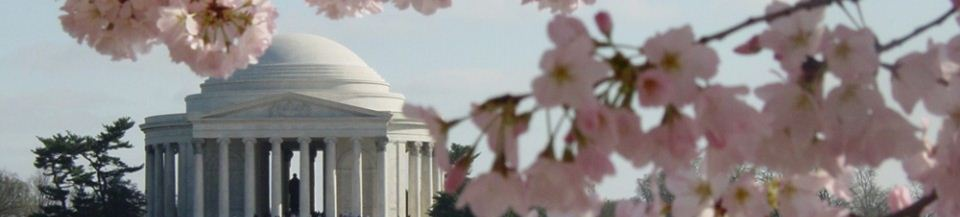 Picture of the Thomas Jefferson memorial in the background with cherry blossoms in the foreground.